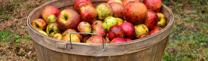 Aké jablká použiť na jablkovú brandy