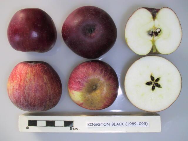 Jablká Kingstonblack detail