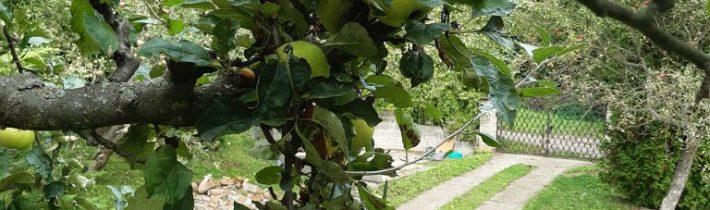 Štedrá úroda jabĺk